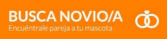 busco_novio